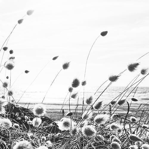 L'esprit du vent